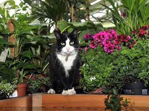 Purr n Fur UK Store Cats Socks Bournville Garden Centre